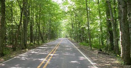 Pentoga Trail Trees-3